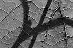 backlit silhouette V1