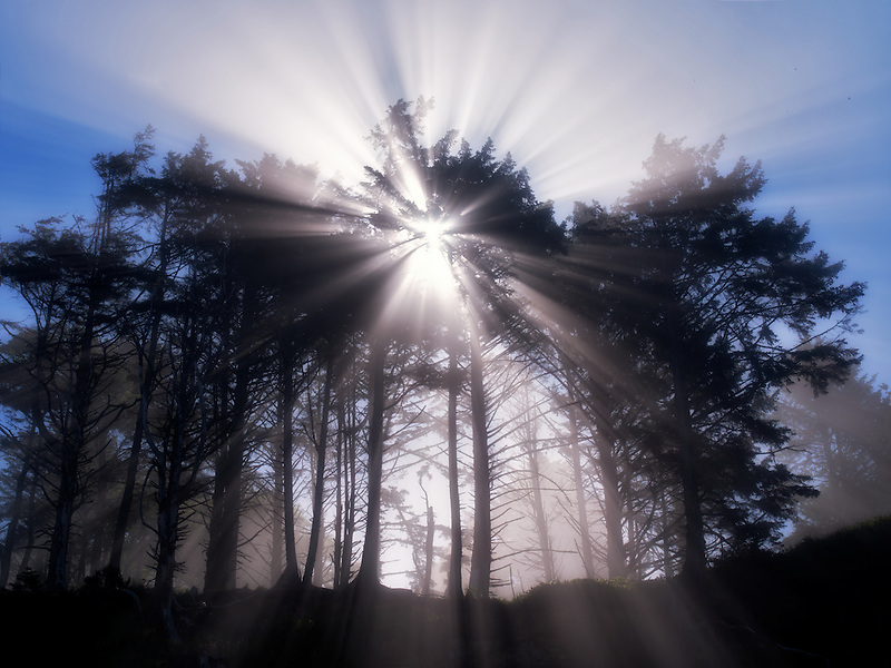Sunburst through trees at Devils Punchbowl State Natural Area, Oregon, Oregon