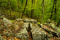 Hardwood forest in spring in the Adirondack Mountains in New York State