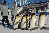 Japan Penguin Parade