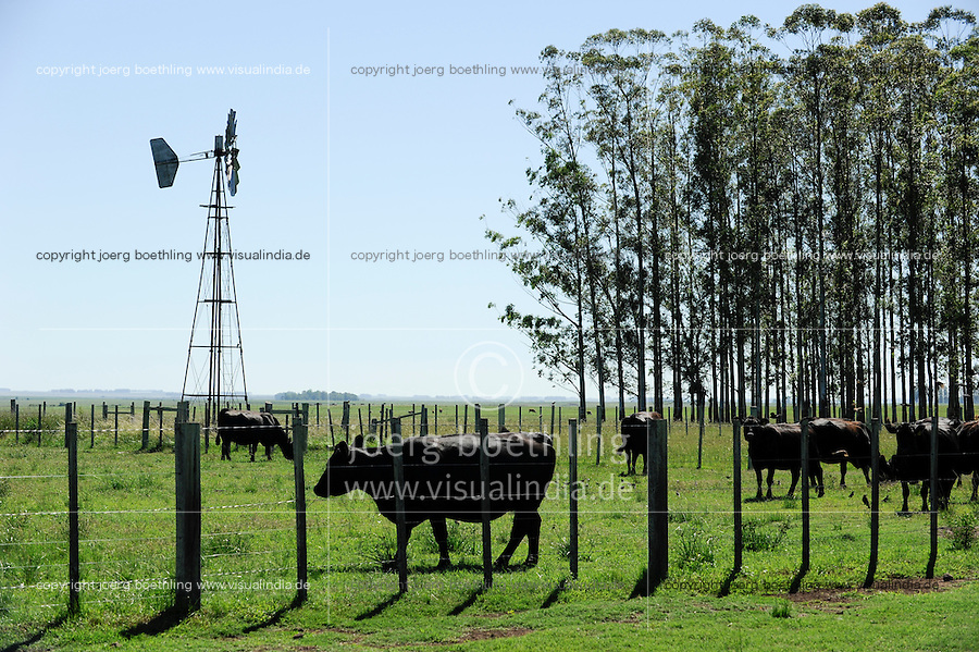 URUGUAY grazing land with small wind mill