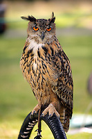 Pictured: An owl Saturday 13 August 2016<br />Re: Grow Wild event at  Furnace to Flowers site in Ebbw Vale, Wales, UK