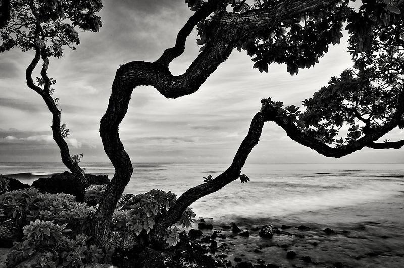 Sunrise and heliotrope trees. Hawaii, The Big Island.