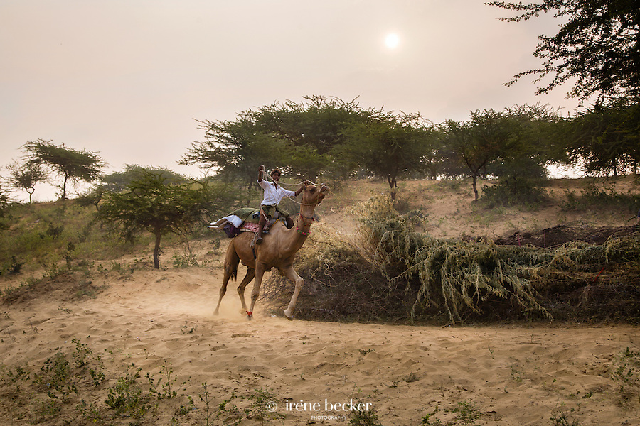 Camel Rider. A scene from the Pushkar Camel Fair 2013, Rajasthan, India.