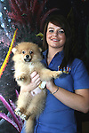 Pomerainian puppy at the Pet Centre, Boyne Shopping Centre, Drogheda...Photo NEWSFILE/Jenny Matthews.(Photo credit should read Jenny Matthews/NEWSFILE)....This Picture has been sent you under the condtions enclosed by:.Newsfile Ltd..The Studio,.Millmount Abbey,.Drogheda,.Co Meath..Ireland..Tel: +353(0)41-9871240.Fax: +353(0)41-9871260.GSM: +353(0)86-2500958.email: pictures@newsfile.ie.www.newsfile.ie.FTP: 193.120.102.198.