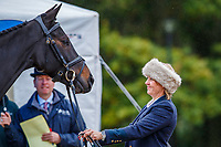 AUS-Samantha Birch presents Faerie Magnifico during the First Horse Inspection for the CCI2*-L6YO. 2019 FRA-Mondial du Lion - FEI World Breeding Championships. Le Lion d'Angers. France. Wednesday 16 October. Copyright Photo: Libby Law Photography