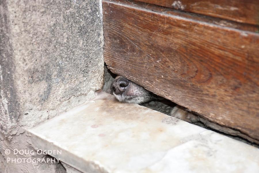 Dog nose under door.  Montorosso, Italy