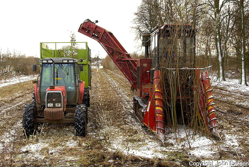 The harvesting machine tackling 5 acres of willow coppice
