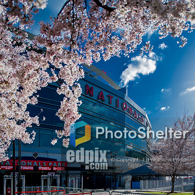 5 April 2018: Cherry blossoms are in full bloom outside Nationals Park prior to the  New York Mets visiting the Washington Nationals on their Home Opening Day at Nationals Park in Washington, DC. The Nationals fell to the Mets 8-2. Mandatory Credit: Ed Wolfstein Photo *** RAW (NEF) Image File Available ***