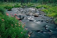 Black River<br />