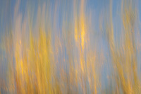 Yellow leaves and blue sky in an autumn abstract.