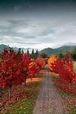 USA, Oregon, Medford, Buren Vineyard
