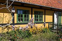 Fachwerkhaus und Vorgarten auf Frederiks&oslash;, Ertholmene (Erbseninseln) bei Bornholm, D&auml;nemark, Europa<br /> half-timber house on Frederiks&oslash;, Ertholmene, Isle of Bornholm Denmark