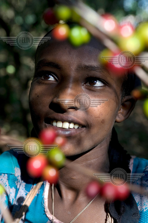 A young woman smiles while picking coffee cherries.