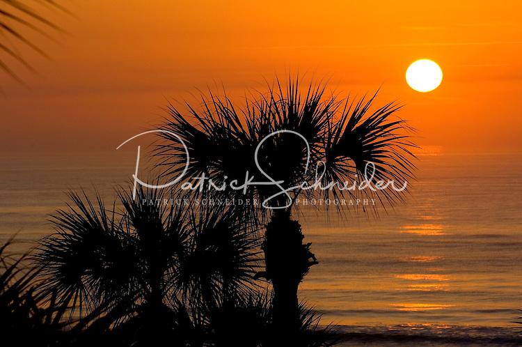 The sun rises over a palm tree in Amelia Island, FL