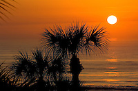 The sun rises over a palm tree in Amelia Island, FL
