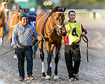 HALLANDALE BEACH, FL - FEB 03: Audible #4 is led to the paddock prior to winning the  $350,000 Holy Bull Stakes (G2)for trainer Todd A. Pletcher at Gulfstream Park on February 3, 2018 in Hallandale Beach, FL. (Photo by Bob Aaron/Eclipse Sportswire/Getty Images)