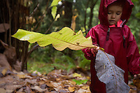 Fiddlehead Forest School student Audette Laird, 3, stands with giant Magnolia leaves during a hike at the Washington Park Arboretum.