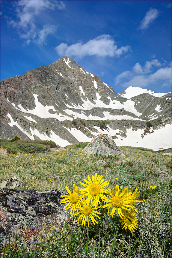Near Lower Crystal Lakes, the alpine Colorado wildflowers were beginning to bloom in the Rocky Mountains near Breckenridge. In the distance, Crystal Peak rises to over 13,000 feet.