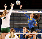 BROOKINGS, SD - OCTOBER 28: Sierra Peterson #1 from South Dakota State tips the ball past Emily Halverson #9 from North Dakota State during their match Sunday afternoon at Frost Arena in Brookings. (Photo by Dave Eggen/Inertia)