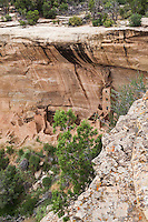 From an overlook above, a view of the Square Tower House cliff dwelling ruins at Mesa Verde National Park in southwestern Colorado.