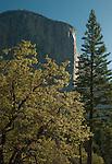 El Capitan spring