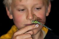 Kind, Junge mit Blaugrüne Mosaikjungfer auf Finger, Blaugrüne-Mosaikjungfer, Aeshna cyanea, Aeschna cyanea, blue-green darner, southern aeshna, southern hawker