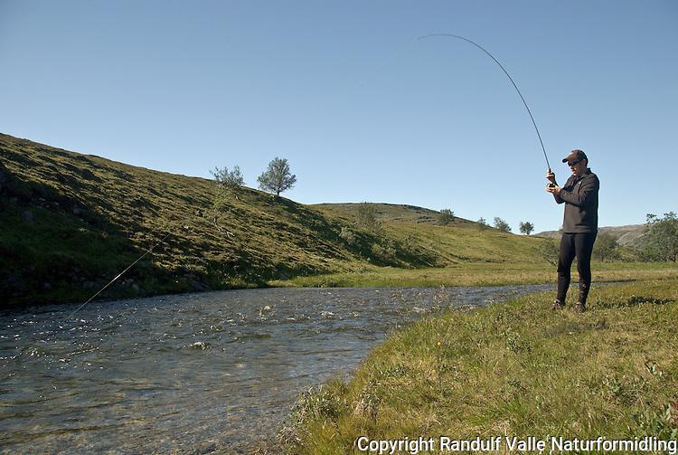 Mann kjører fisk i liten elv. ---- Man fighting fish in small river.