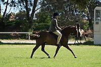 Champion Large Pony