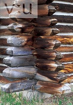 Lodgepole Pine logs, building exterior