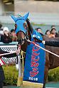 Horse Racing : Challenge Cup 2016