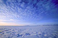 The Trans Alaska oil pipeline stretches across wind blown snow covered tundra, North slope, Arctic, Alaska.