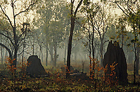 Australia. Northern Territory. Kakadu National Park. Smoke clearing after a controlled burn. Termite mounds..