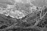 Wiamea Canyon and dead tree. Koke'e State Park. Kauai, Hawaii