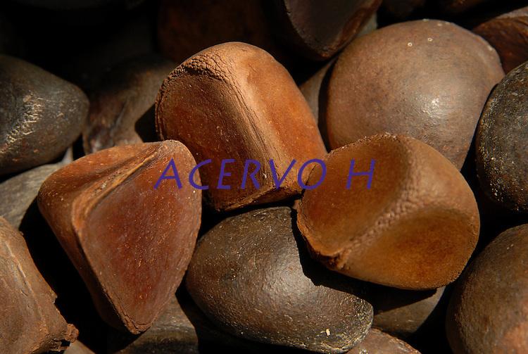 Semente da Andiroba &Aacute;rvore de grande porte, que chega a atingir 30 metros de altura. O fuste (parte que vai do solo aos primeiros galhos) &eacute; cil&iacute;ndrico e reto. A casca &eacute; grossa, tem sabor amargo e desprende-se facilmente em grandes placas. Copa de tamanho m&eacute;dio e bastante ramosa. A infloresc&ecirc;ncia &eacute; uma pan&iacute;cula (esp&eacute;cie de cacho). As flores t&ecirc;m cor creme e o fruto &eacute; uma c&aacute;psula que se abre quando cai no ch&atilde;o, liberando de quatro a seis sementes. Floresce de agosto a outubro na Amaz&ocirc;nia e frutifica de janeiro a maio. Por&eacute;m, h&aacute; muitas varia&ccedil;&otilde;es dependendo da regi&atilde;o.&Eacute; nativa da Amazonia.O oleo e as gorduras s&atilde;o extraidos e utilizados para a produ&ccedil;&atilde;o de: REPELENTES DE INSETOS, ANTISSEPTICOS, CICATRIZANTES e ANTIINFLAMATORIOS.<br /> Salvaterra, Maraj&oacute;, Par&aacute;, Brasil<br /> Foto Paulo Santos/Interfoto<br /> 01/11/2008