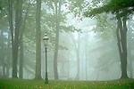 Village Green Gazebo on foggy morning.