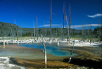 Opalescent Pool , Black Sand Basin , burned trees and spring