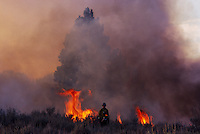 Smoke and flames rise as BLM staff sets a prescribed burn in Oregon to clear land for grazing and keep down potentially flammable undergrowth. Years of fire suppression create an environment that is prone to wild fires during dry summers.  Managing cattle land and wilderness ecosystems is a difficult balance. ..   More than a billion dollars is spent annually suppressing wildfires that burn millions of acres of western land. Though fire plays an integral role in many forest and rangeland ecosystems, decades of efforts directed at extinguishing every fire that burned on public lands have disrupted the natural fire regimes that once existed. ..   Moreover, as more communities develop and grow in areas that are adjacent to fire-prone lands in what is known as the wildland/urban interface, wildland fires pose increasing threats to people and their property... Though wildland fires play an integral role in many forest and rangeland ecosystems, decades of efforts directed at extinguishing every fire that burned on public lands have disrupted the natural fire regimes that once existed. ..   Moreover, as more communities develop and grow in areas that are adjacent to fire-prone lands in what is known as the wildland/urban interface, wildland fires pose increasing threats to people and their property...