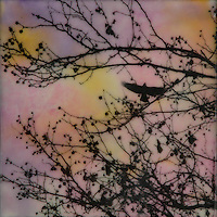 Encaustic painting of bird in sky through silhouette of branches.