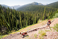 A backpacker hikes up a pass to Holbrook Creek in the Bob Marshall Wilderness.