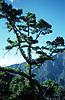 National Park Caldera de Taburiente, La Palma de Gran Canaria<br /> <br /> Parque Nacional Caldera de Taburiente, La Palma de Gran Canaria<br /> <br /> Nationalpark Caldera de Taburiente, La Palma de Gran Canaria<br /> <br /> 3821 x 2476 px<br /> Original: 35 mm slide transparency