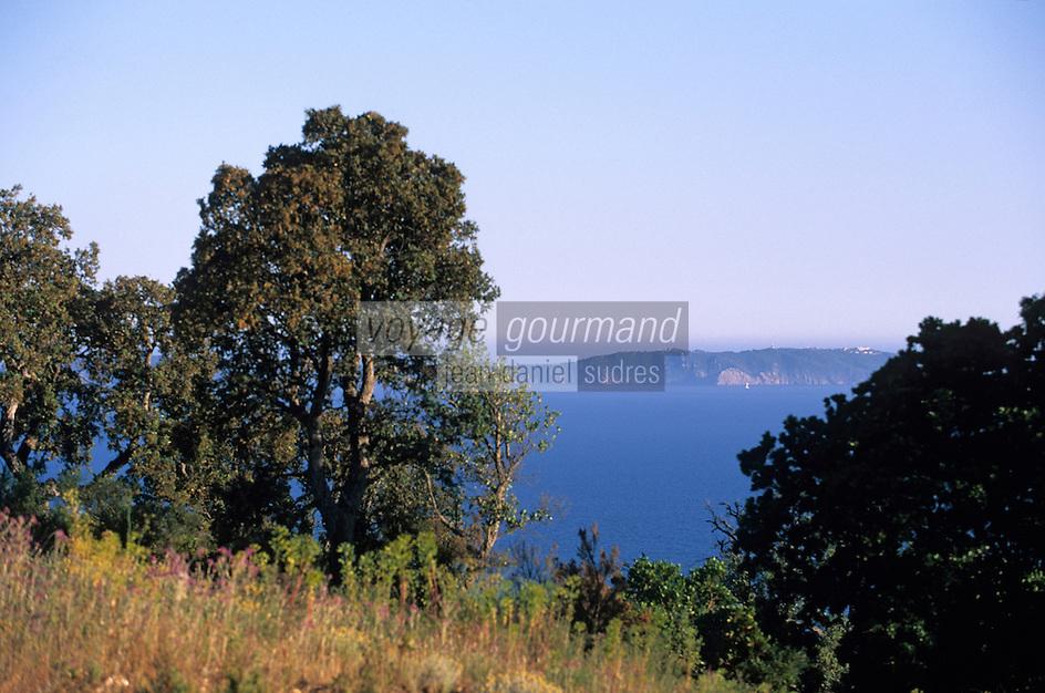 Europe/Provence-Alpes-Côte d'Azur/83/Var/Rayol-Canadel-sur-Mer: Vue sur la corniche des Maures et les îles d'Hyères depuis le col du Canadel