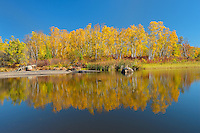 Forest in autumn foliage reflected in the Whiteshell River<br /> Whiteshell Provincial Park<br /> Manitoba<br /> Canada