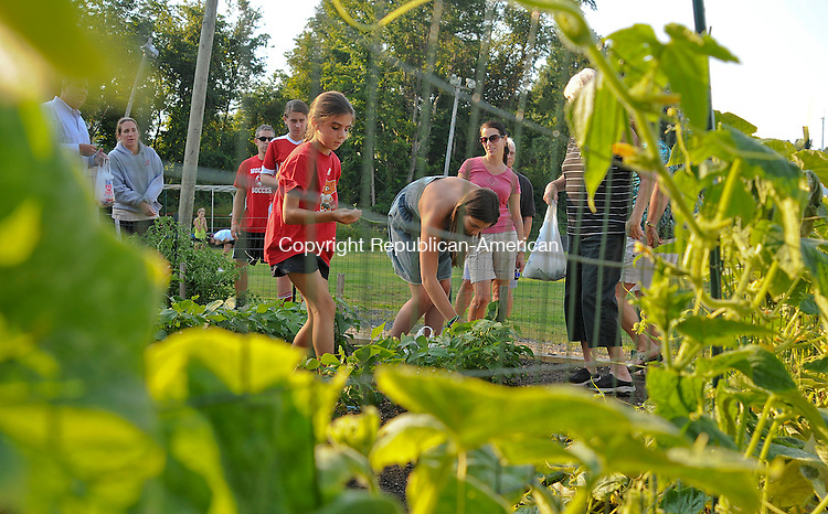 WOLCOTT, CT 20 AUGUST 2013--082013JS01-Volunteers, including Samantha Riviezzo, 10, (in red) help pick vegetables from the Wolcott Food Pantry Vegetable Garden located next to the Wolcott Activity Learning Center on Wolcott on Tuesday. The project was created by the Frisbie Elementary School Project Explore students. Funding for the project originated from a Wolcott Education Foundation Green which Frisbie's 2011 Go Green Team utilized to win close to $3000 in a Keep Connecticut Cool competition.  Jim Shannon Republican American
