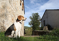 Dog at Mountain in Lozere,France