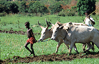 Farmer Child plowing field