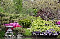 65021-03617 Japanese Garden in spring,  Missouri Botanical Garden, St Louis, MO