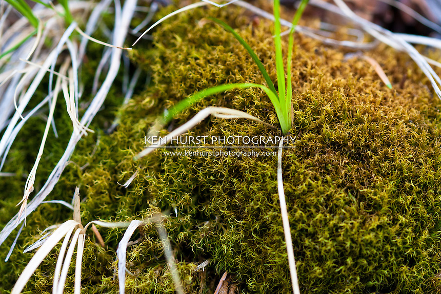 Moss growing along hiking trail near Red River, New Mexico.