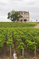 Vineyard. Chateau XXXX, Saint-Chrystoly-Medoc. Medoc, Bordeaux, France