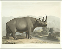 BNPS.co.uk (01202 558833)<br /> Pic: Bonhams/BNPS<br /> <br /> The Africa Rhino.<br /> <br /> A 200-year-old volume of art work that gave Briton's their first look at the country of South Africa has surfaced. <br /> <br /> Natural history painter Samuel Daniell became one of the first to depict the African country while on an expedition there at the turn of the 19th century. <br /> <br /> His raw, almost photographic, paintings were shipped back to the UK to offer westerners a before unseen window into South Africa. <br /> <br /> The stunning works, which were done before the dawn of photography, picture wild animals and native peoples against the rugged backdrop of the the country's Atlantic coast. <br /> <br /> This first edition copy has been in private ownership in South Africa for the past century but will be sold on February 1 by Bonhams auctioneers. <br /> <br /> It is thought to be worth up to &pound;25,000.